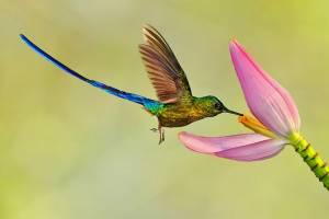 Найменший птах