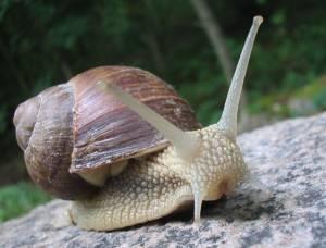 Сама повільна тварина