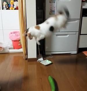 Залякані огірками коти розсмішили інтернет