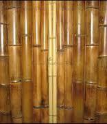 bambukovye-stvoly