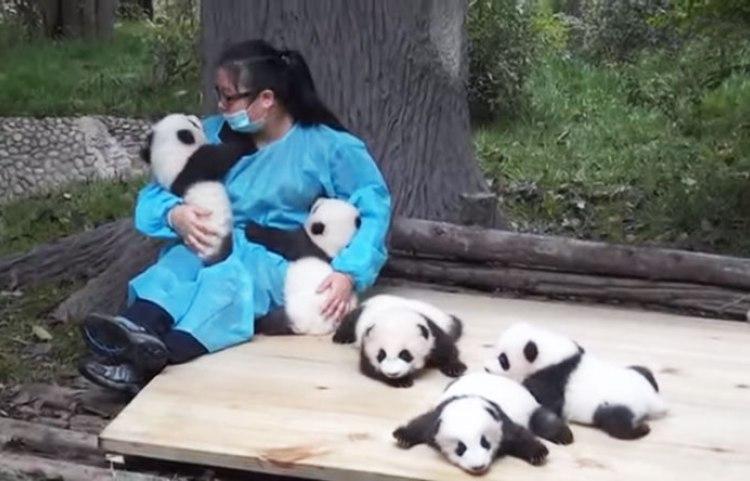 обіймати панд